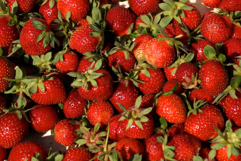 Erdbeer-Pflückerin in Anamur